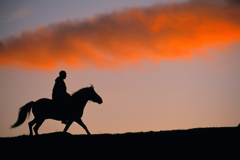 Horse riding with tour operator Fjällhästen AB, Ammarnäs, Västerbotten, Sweden