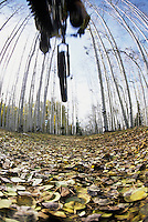 A mountain biker jumps above a leaf covered trail in the La Sal Mountains near Moab, Utah.