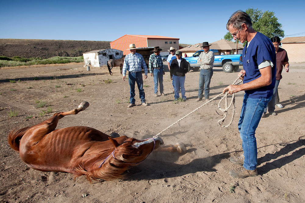 MCDERMITT, NV - AUG 17  Dr Eric Davis (C) founder of RAVS steadies Red a 5 year old Sorrow Quarter Horse to the ground as he prepares to do castration surgery during a clinic sponsored by the Humane Society of the United States August 17, 2009 in McDermitt Nevada.  (Photograph by David Paul Morris)