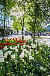 Flower exhibition for 17th May celebrations in Bergen, Norway. 16/05/14. Photo by Andrew Tallon