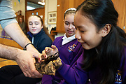 12/11/2018 Repro free: Galway Science and Technology Festival, the largest science event in Ireland, runs from 11-25 November featuring exciting talks, workshops and special events. Full programme at GalwayScience.ie. Amoy Meng,  from Our  Lady's College Galway  with a beetle from The Bug Doctors collection ( Dr Michel Dugon- NUI Galway) Photo:Andrew Downes, Xposure.