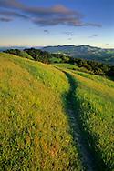 Sunset light on green hills and trail along Lafayette Ridge, Lafayette, CALIFORNIA
