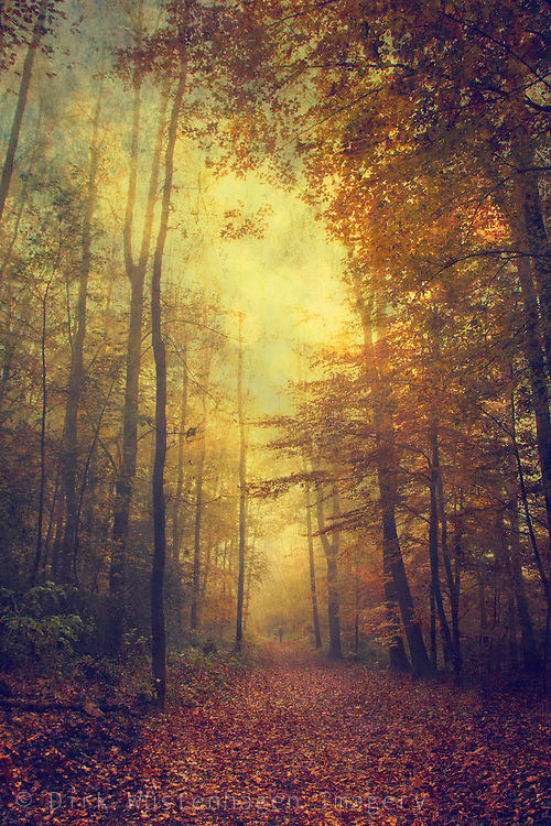 Moody forest impression on an autumn day.<br /> <br /> Prints & more: http://society6.com/product/fall-colors--mysteries_Print