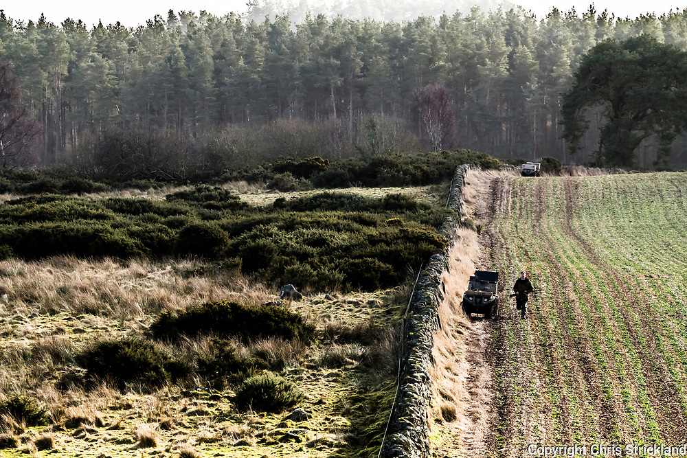 Mellerstain, Kelso, Scottish Borders, UK. 21st February 2018. Guns of the Duke of Buccleuch Hunt wait patiently for hounds to flush a fox from gorse bushes on Mellerstain estate.