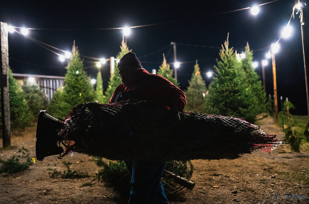 """Kevin Gray carries a wrapped tree to a customer's car.<br /> <br /> Hickory Creek Farm is located on Burnetts Chapel Rd. in Greensboro, NC. The Christmas tree farm's philosophy is, """"We are a NC Century Farm dedicated to providing you with a beautiful Christmas Tree and a memorable family experience."""" Kevin Gray, a captain with the city of Greensboro Fired Department, helped convert his father's decades of focus on growing tobacco, vegetables and livestock to growing Christmas trees about 6 years ago. Gray says the farm was originally started by his great grandfather in 1913. Gray learned the business with another farmer for 12 years before embarking on tree sales five years ago. The sales operation sells a mix of trees grown by him and other North Carolina farmers at his retail location at his barn. <br /> <br /> Was tobacco, vegetables and livestock for majority of that time until we started with the tree planting about 6 years ago.<br /> <br /> The farm was actually originally started by my great grandfather in 1913<br /> <br /> This is our fifth season here at the farm.  I have worked for another farmer with trees for 12 years before that<br /> <br /> <br /> <br /> Photographed, Saturday, December 7, 2019, in Greensboro, N.C. JERRY WOLFORD / Perfecta Visuals"""