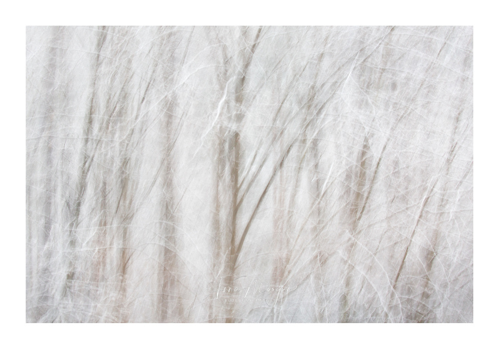 Ethereal winter snow scene on winter solstice with an atmospheric feel