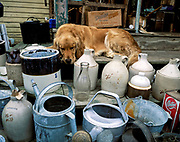 Sleeping dog at a flea market, Mt Desert Island, Maine