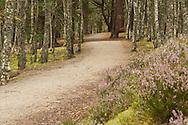 The Spey Way near Aviemore, Cairngorm National Park, Scottish Highlands, Uk