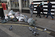 Urban pigeons gather near a pile of rubbish that awaits collection, on 17th January 2018 in Westminster, London, England.