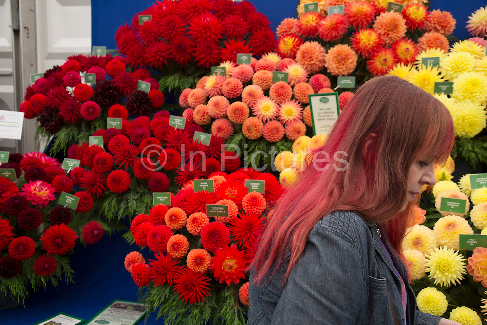 Harrogate Flower Show, North Yorkshire, England, UK. The Plant Pavilion is full of every variety of flowering plant you can think of, with blooms of all shapes, sizes and colours. People blending in with the Dahlia blooms.