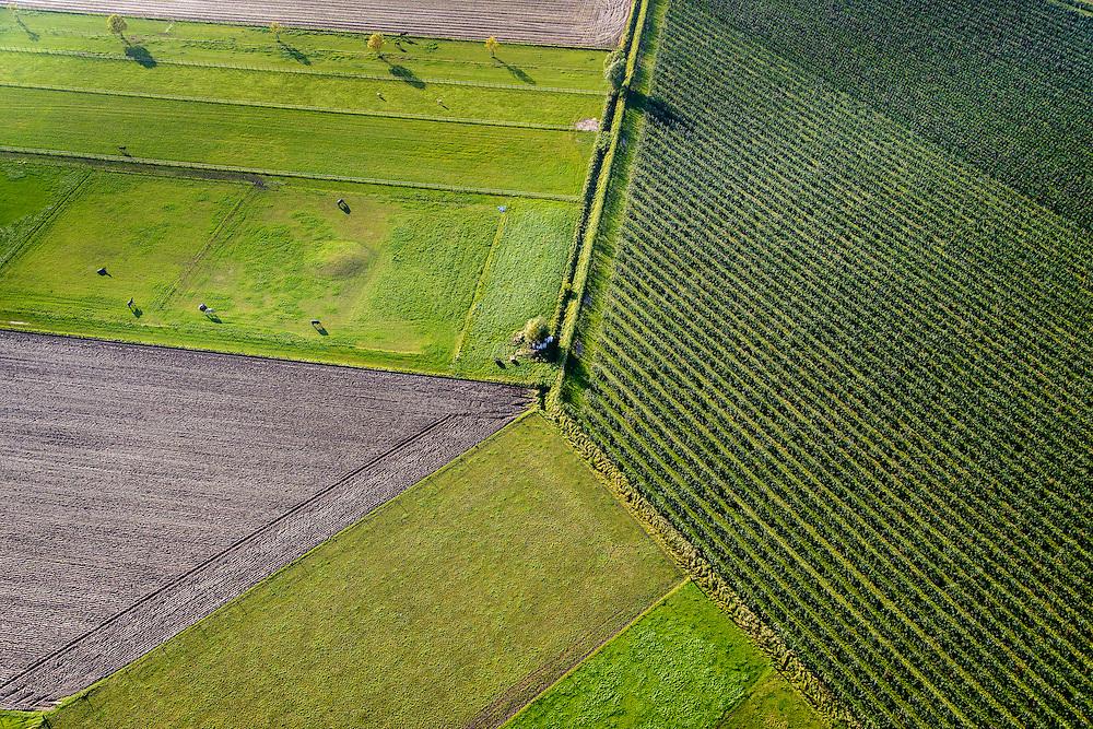 Nederland, Noord-Brabant, Woudrichem, 28-10-2014; vlakverdeling van akkers, weilanden met vee en rijen bomen van een boomkwekerij. Lange schaduwen in de herfst.<br /> Division of fields, pastures with cattle and rows of trees from a nursery<br /> Diagonal row of trees along road in the countryside. Long shadows in autumn.<br /> luchtfoto (toeslag op standard tarieven); aerial photo (additional fee required); copyright foto/photo Siebe Swart