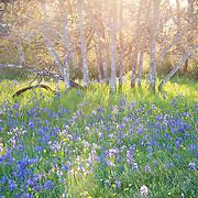 Garry Oak Ecosystems