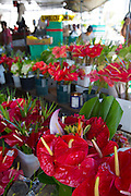 Anthurium flower, Farmers Market, Hilo, The Big Island of Hawaii