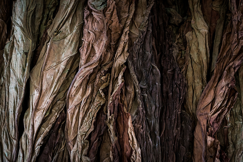 Tobacco leaves at market in Wewak, Papua New Guinea