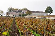 Vineyard. Chateau Clos Fourtet, Saint Emilion, Bordeaux, France