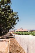 Vineyard of Torre De Palma Wine Hotel, Herdade de Torre de Palma > torredepalma.com