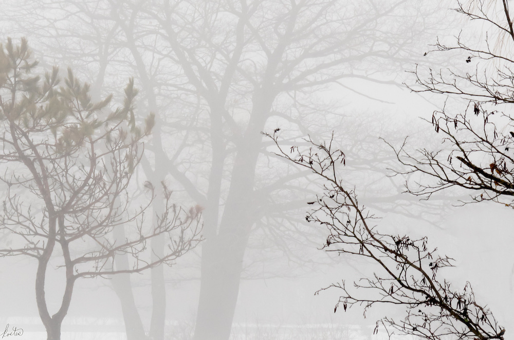 Very heave fog in January in Mid-Coast Maine, very moody and mysterious.