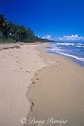beach on east coast of Dominican Republic ( Caribbean Sea )