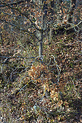 close up of tree twigs during late autumn season