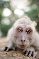 Sacred Monkey Forest Ubud Sanctuary Bali Indonesia