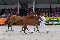 56 - Go-Melody VMH<br /> KWPN Paardendagen 2011 - Ermelo 2011<br /> © Dirk Caremans