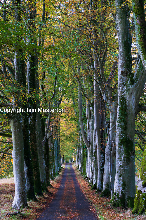 View of tree lined avenue on approach to Drummond Castle Garden in the autumn in Crieff, Scotland, UK