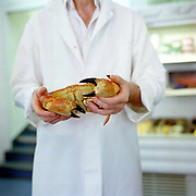 Fishmonger Willie Little holds a brown crab from Orkney at his fishmongers shop Fish in Crieff, Perthshire, Scotland. Willie Littles passion for the sea can be tasted at his Little's Restaurant in Blairgowie. Fish in Crieff offer a wide range of fresh fish and shellfish bought direct from Scrabster Market in the North Of Scotland - from market to plate within 12 hours.