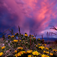 Flowers blanket Waterworks hill beneath a sunset thundestorm in late June in Missoula.