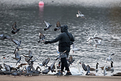 © Licensed to London News Pictures. 15/01/2021. London, UK. A man feeds birds at the Serpentine in Hyde Park, central London. The Met police has urged Londoners to stick to lockdown rules which were introduced to fight the spread of a new, more aggressive strain of COVID-19. Photo credit: Ben Cawthra/LNP
