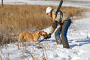 Tom Taunton and Rowdy pheasant hunting in South Dakota