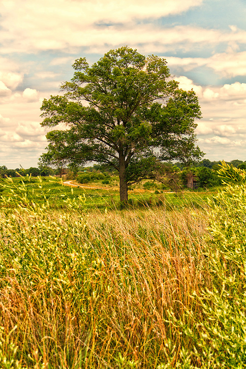 This shot was taken at Busch Wildlife in Missouri. If you look really close you can see a hidden bunker to the right of the tree. ..This shot feels like serenity to me. It is just beautiful, calm and peaceful.