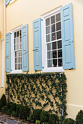 December 21, 2017 - Charleston, South Carolina, United States of America - Vines decorate a yellow wall on a historic home along King Street in Charleston, SC. (Credit Image: © Richard Ellis via ZUMA Wire)