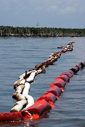 06 June 2010. Barataria Bay to Grand Isle, Jefferson/Lafourche Parish, Louisiana. <br /> Oil soaked boom is all that protects the Cat Island chain in Barataria Bay, home to thousands of nesting birds including the Louisiana brown pelican, a bird only recently removed from the endangered species list. The birds are attempting to rear their young with the threat of oil pouring into their habitat.  The ecological and economic impact of BP's oil spill is devastating to the region. Oil from the Deepwater Horizon catastrophe is evading booms laid out to stop it thanks in part to the dispersants which means the oil travels at every depth of the Gulf and washes ashore wherever the current carries it. The Louisiana wetlands produce over 30% of America's seafood and are the most fertile of their kind in the world.<br /> Photo; Charlie Varley/varleypix.com