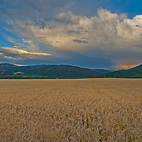 Dramatic clouds soar over a wheat field in Montana's Gallatin Valley.  The Gallatin Range is in the background.