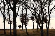 Marvine Ranch, Aledo, Texas