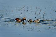 Wildlife photography from Saskatoon Lake Provincial Park, Alberta, Canada