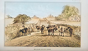 Belgium Milk Cows from Cattle and dairy farming. Published 1887 by Govt. Print. Off. in Washington. United States. Bureau of Foreign Commerce (1854-1903) machine colourized historic image
