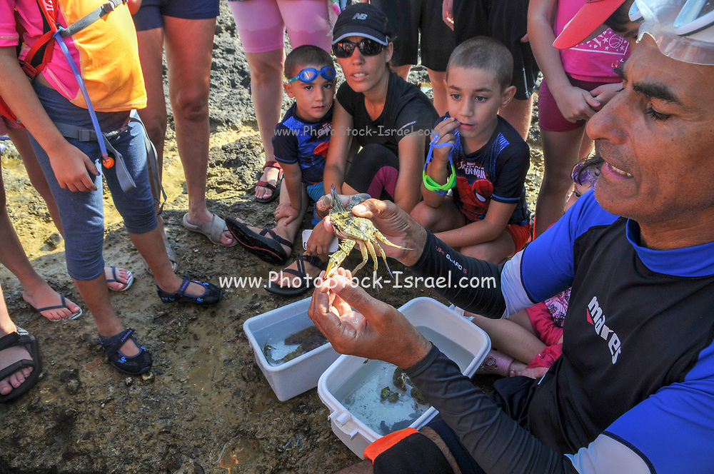 A group of curious children are investigating the living organisms in the shallow tide pools on the beach of Achziv, Galilee, Israel The teacher is explaining the anatomy of a crab