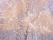 The Zen of Winter