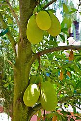 Big Fruit!