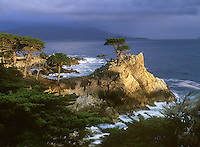 The lone cypress tree along Highway 17 in Pebble Beach, California.