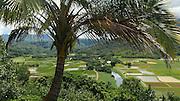 Hanalei Valley Lookout, Taro fields, Kauai, Hawaii