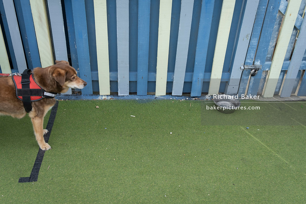 A thirsty dog looks longingly at a water bowl outside a seaside cafe, on 3rd May 2021, in St Leonards, Sussex, England.