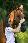 Young woman with her Cleveland Bay cross Thoroughbred  horse in Oxfordshire, United Kingdom.