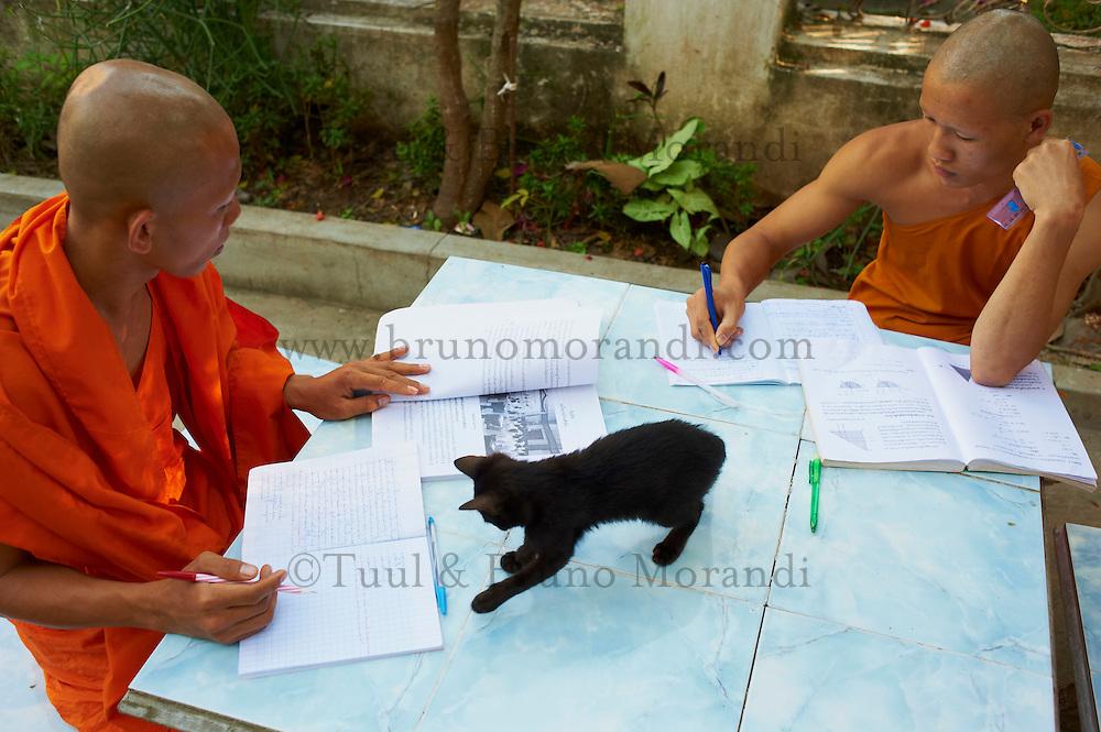 Laos, Province de Luang Prabang, ville de Luang Prabang, Patrimoine mondial de l'UNESCO depuis 1995, moines novices avec le chat Nestor// Laos, Province of Luang Prabang, city of Luang Prabang, World heritage of UNESCO since 1995, novice monk with Nestor the cat