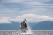 humpback whale, Megaptera novaeangliae, breaching, near Kupreanof Island, Frederick Sound, southeastern Alaska, USA