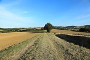 agricultural landscape with track Languedoc Aude France