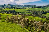 Tea plantation, Kabarole District, Uganda.