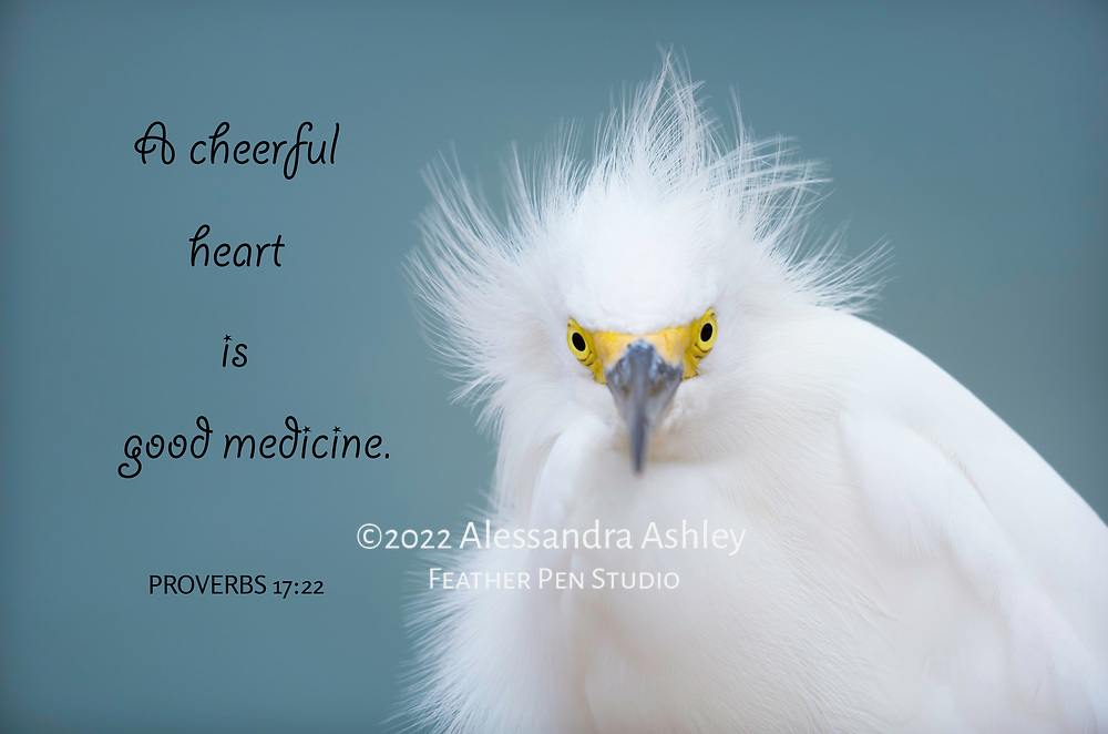 Snowy egret gets its feathers ruffled by ocean breezes.  Sanibel Island, FL.