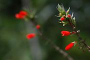 Urubici_SC, Brasil.<br /> <br /> Imagens da Serra Catarinense em Urubici, Santa Catarina. <br /> <br /> Serra Catarinense in Urubici, Santa Catarina. <br />  <br /> Foto: JOAO MARCOS ROSA / NITRO